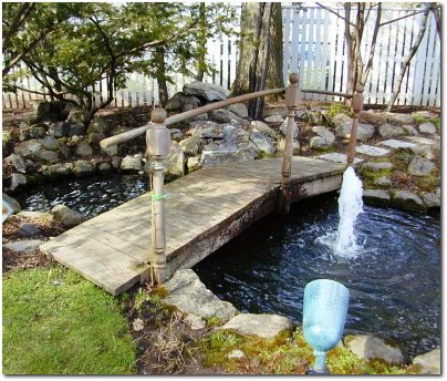 What to do with that koi pond greater hartford real for Koi pond in house