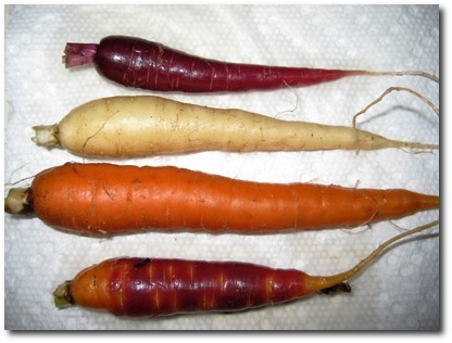 An Assortment of Locally Grown Carrots