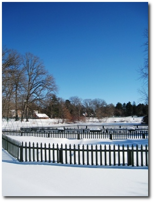 Elizabeth Park Looking Over the Pond House Gardens Towards the Lawn Bowling Club