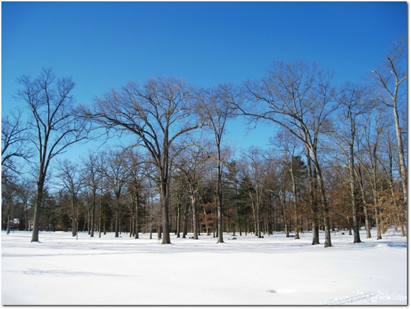 Snow At Elizabeth Park