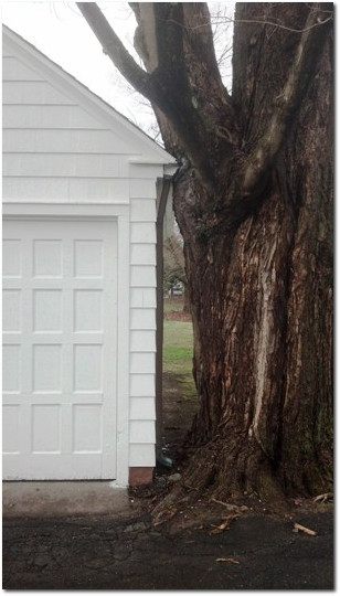 Garage Versus Tree