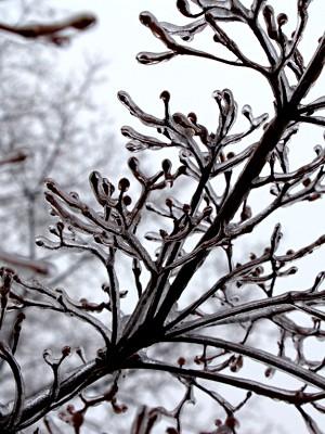 2015-01-04 Winter